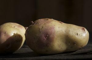 cariboo-potato