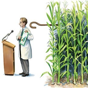 no-science-allowed-on-gmo-x-matt-collins-sciamer-290-x-290
