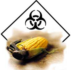 New Norwegian Study Accuses Monsanto Of Falsely Claiming ...