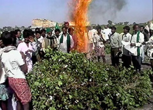 http://foodfreedom.files.wordpress.com/2010/02/indian-farmers-burn-monsantos-genetically-engineered-cotton-x-raqsmediacollective-net-500-x-360.jpg?w=500&h=360