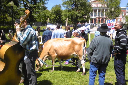Boston Raw Milk Festival, image by Corby Kummer
