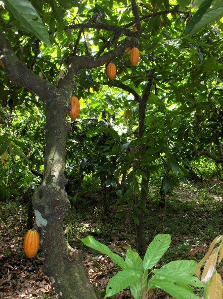 Have you tasted trinidad or tobago - 1 5