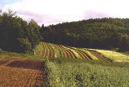 New Brunswick Farming Food Freedom