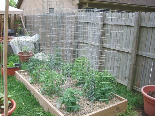 Time To Plant Tomatoes In South Florida Food Freedom