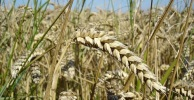 7 Reasons Food Shortages Will Become a Global Crisis