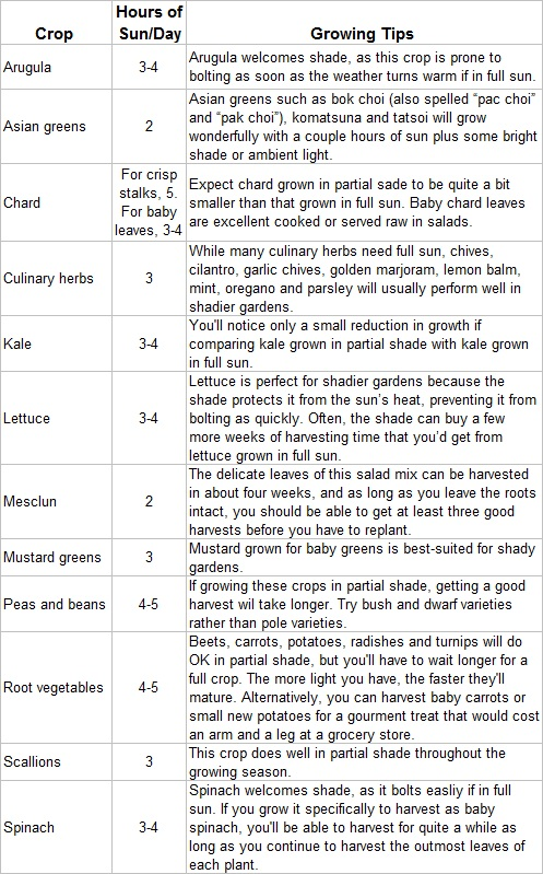 Best Vegetables to Grow in the Shade (2/2)